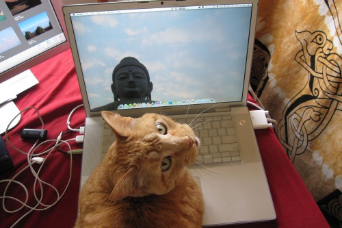 Computer_Using_Cat